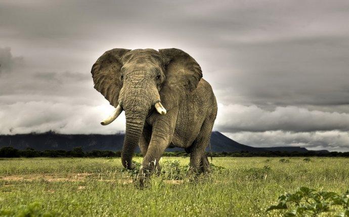 10 самых интересных фактов о слонах | Красиво, интересно, удивительно