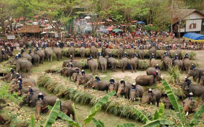 13 марта — Chang Day, национальный день слона в Таиланде | Новости