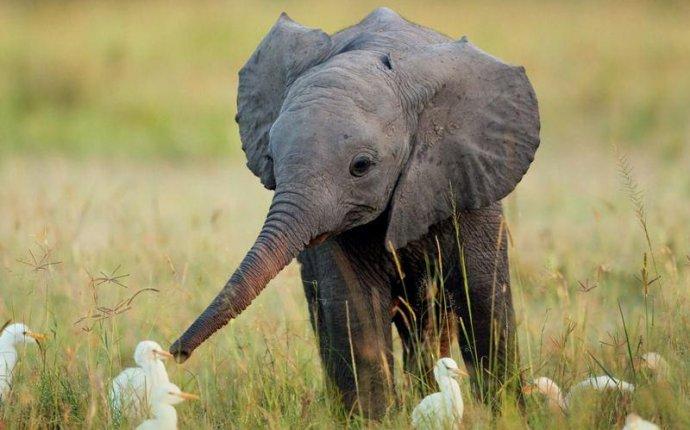 6 заповедников, где можно увидеть слонов | VeniVidi.ru