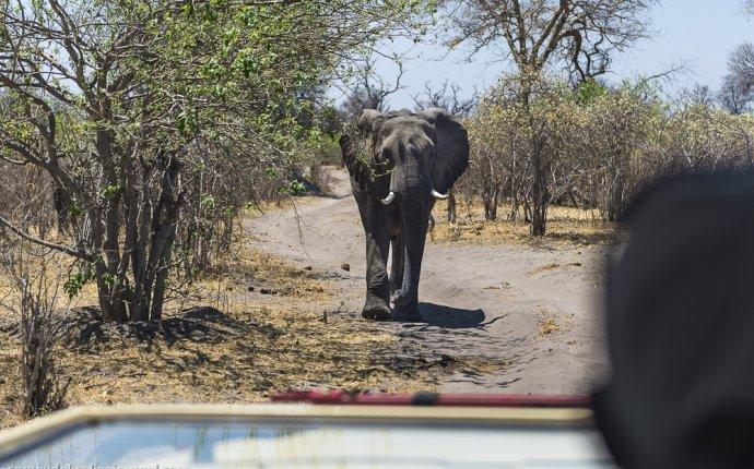 Африканское сафари – как это происходит « Николлетто