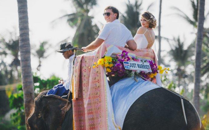 Аренда слона · WedTour