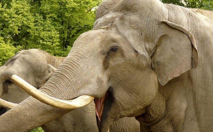 Челябинцы смогут бесплатно посмотреть на слонов в одном из парков