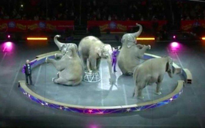 Цирк Ringling Bros. провёл финальные шоу со слонами » Vegan