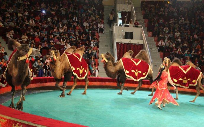 Цирковая программа «Шоу слонов великанов» в Красноярском цирке