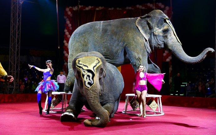 Для детей Парад индийских слонов 2017 В , Санкт-Петербург