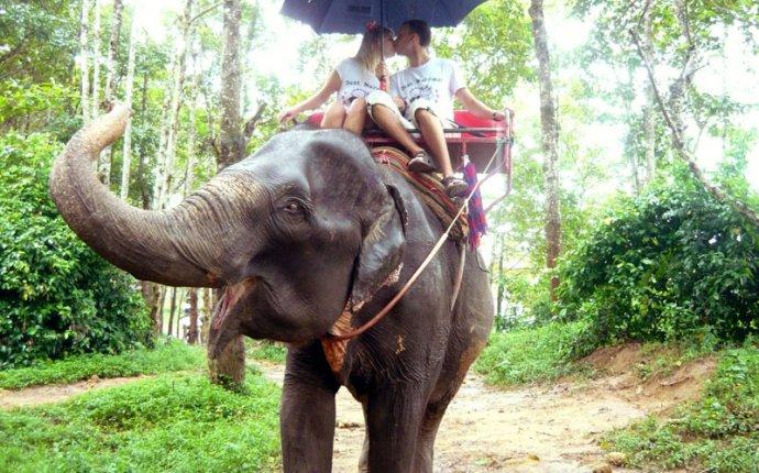 Экскурсия катание на слонах на Пхукете | Hello Thai