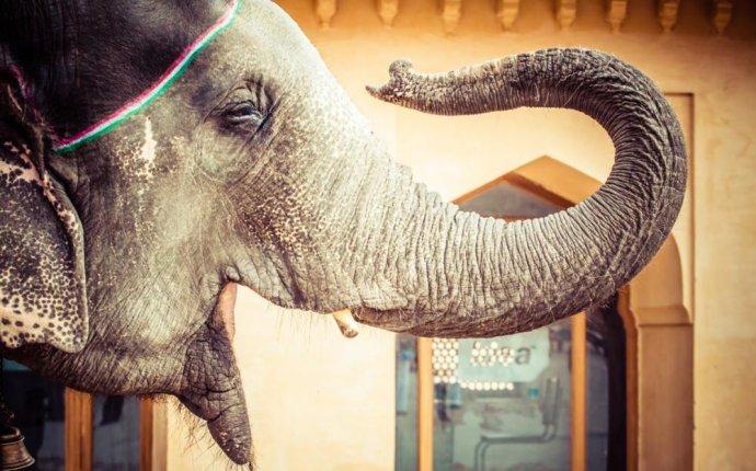 Фото постер «Слон с поднятым хоботом» | Купить постеры | Интернет