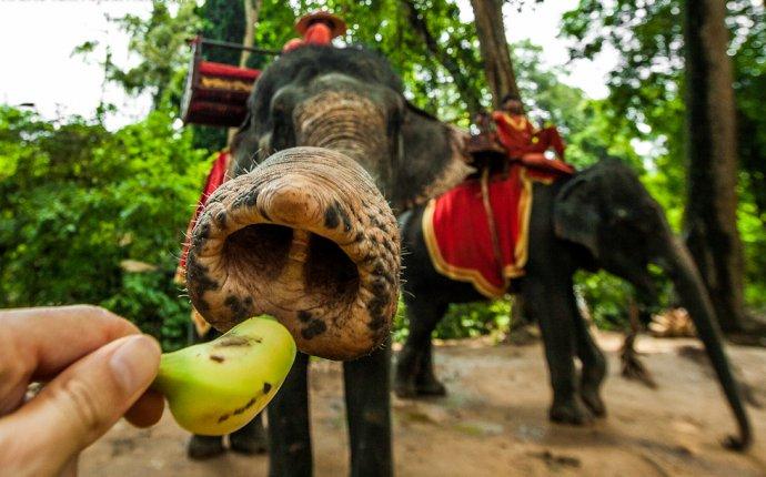 голодные слоны - virako4a
