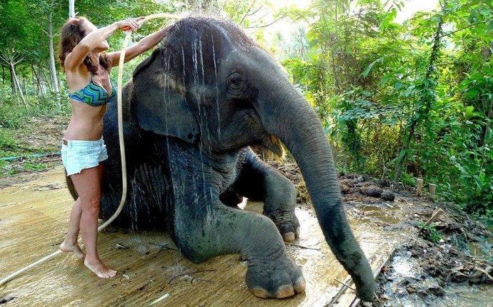 Как научиться мыть слона • НОВОСТИ В ФОТОГРАФИЯХ