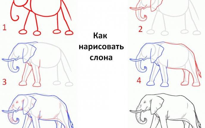 Как рисовать слона поэтапно — Редкие советы