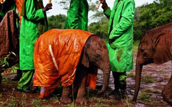 Как Спариваются Слоны Видео - specificationreg