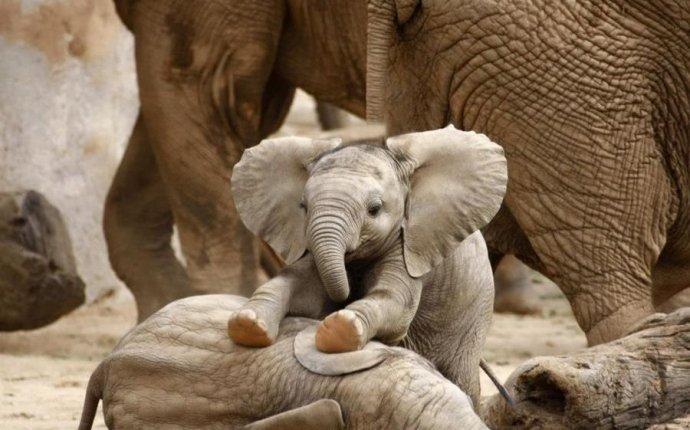Картинки прикольные про слонов (35 фото) • Прикольные картинки и юмор