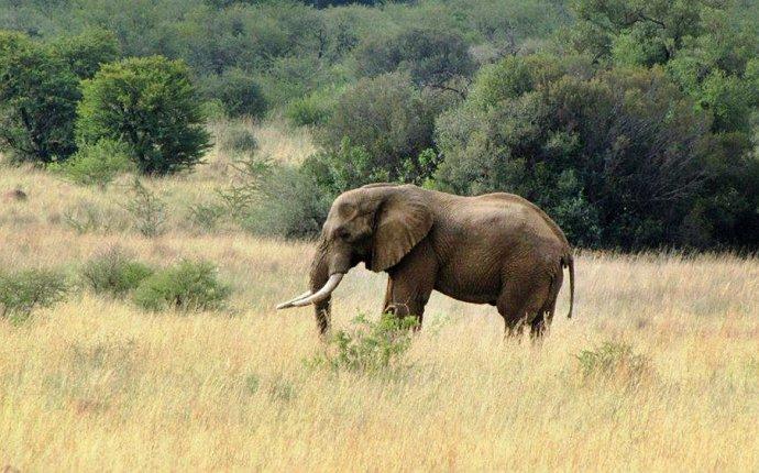 Москва | Новости | Слоненок весом 90 килограммов родился в