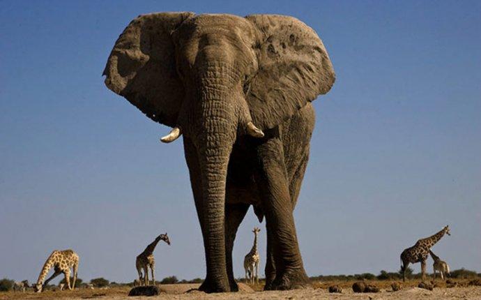 Наблюдение за африканскими слонами в Намибии » Семейный журнал