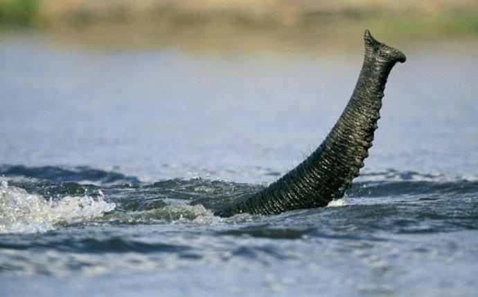 О жизни самых крупных наземных животных » SFW - приколы, юмор
