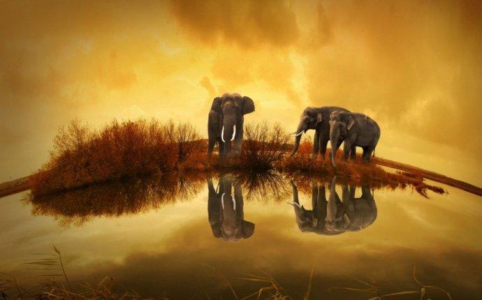 Обои слоны (191 обоев)