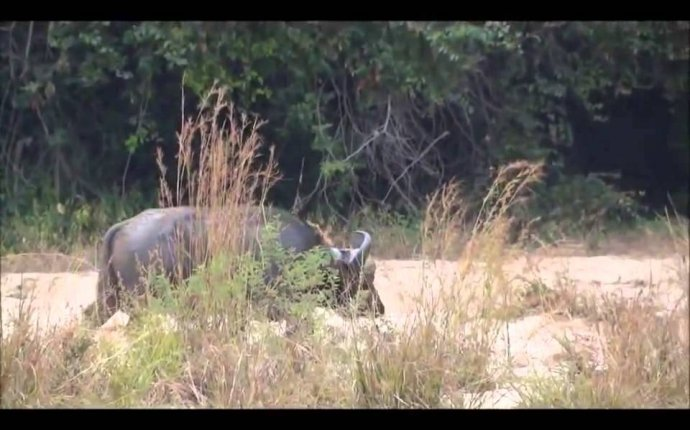 ОХОТА на СЛОНА Safari Hunters Hunting Elephant in Tanzania - YouTube