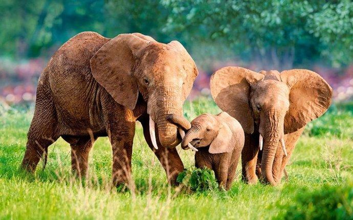 Пазл Castorland Семья слонов 500 деталей Пазл Castorland Семья