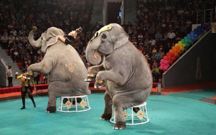 По челябинским улицам прогуляются слоны-великаны. UPD: уже сегодня