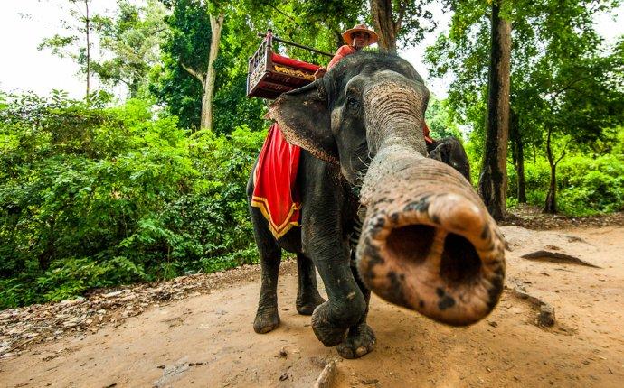 Покататься на слонах