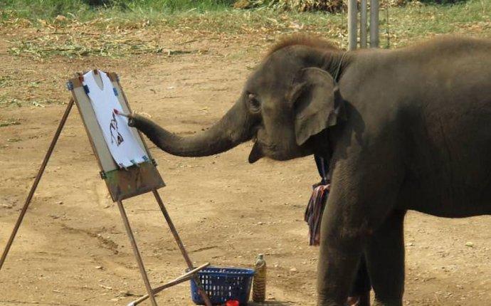 Полезные животные в Таиланде: слоны и обезьяны