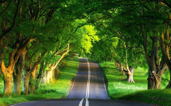 Pourquoi les routes sont-elles souvent bordées de platanes ? - Beekoz