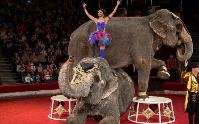 Шоу индийских слонов - Заотдых Омск