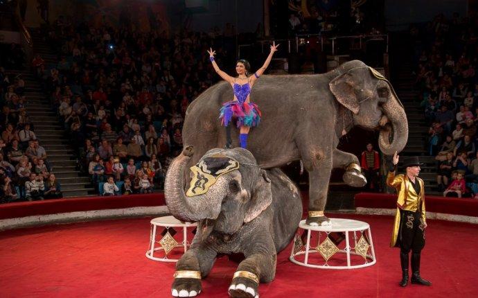 Шоу слонов великанов - Билеты на концерт, в театр, цирк, заказать