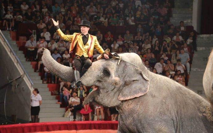 Шоу слонов великанов» — фотогалерея Челябинского цирка