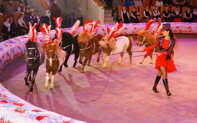 Шоу слонов великанов» — «Тюменский Цирк»