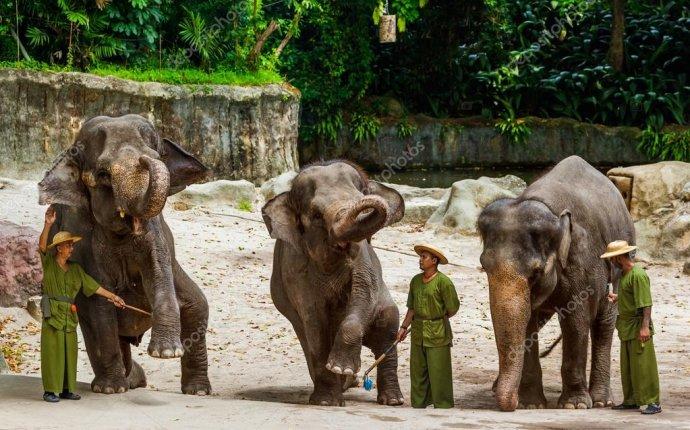 Сингапур - 14 апреля: Слон шоу в Сингапурском зоопарке на 14