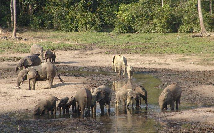 слон фото цена