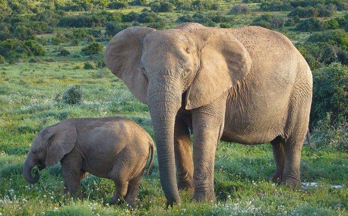 Слон и слоненок - Психология - Для души - Статьи - Школа радости