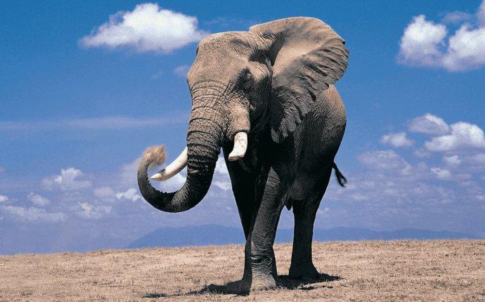 Слон - значение символа в разные времена