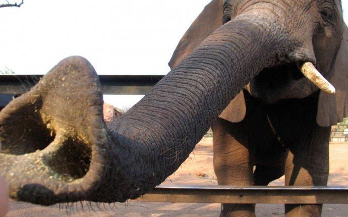 Слоны » 21 Регион - Информационно-развлекательный портал