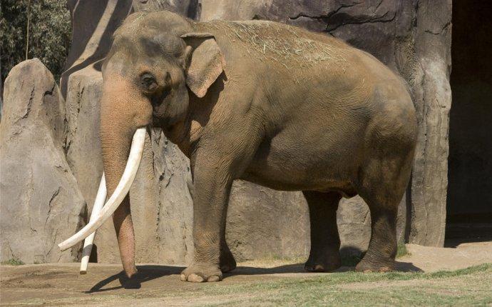 Слоны | Энциклопедия животных