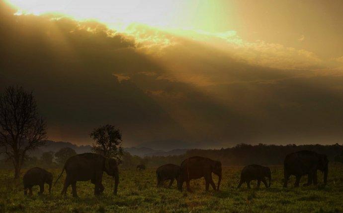 Слоны фото и картинки
