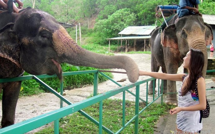 Слоны на Пхукете » Остров Пхукет, цены на экскурсии, пляжи, отзывы