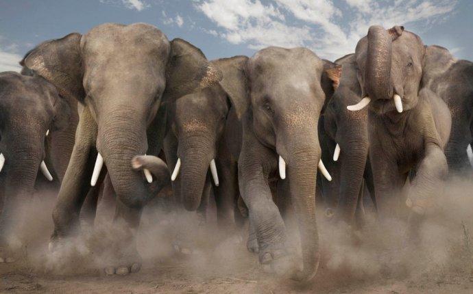 Слоны-убийцы затаптывают до смерти крестьян в Китае