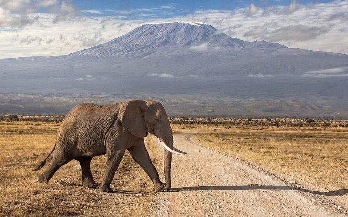 Собирать пазлы онлайн - Слон на фоне гор