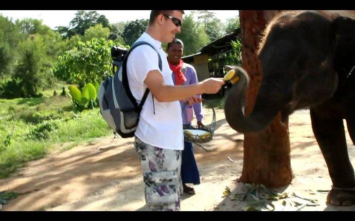 Сонник Слон к чему снится Слон во сне видеть