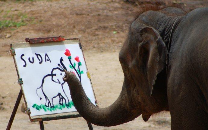 Тайские слоны рисуют автопортреты — Татьянин день