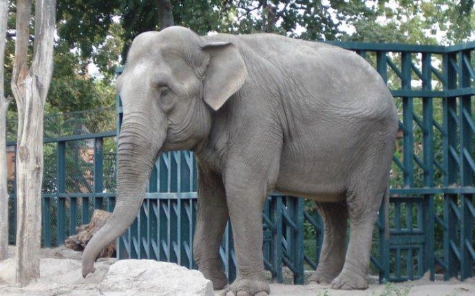 у слона длинный хобот