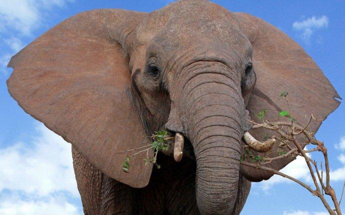 В Индии дикий слон насмерть затоптал шесть человек :: Новости