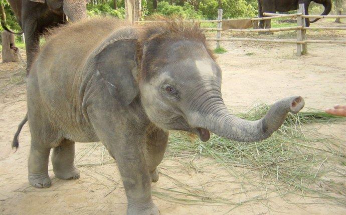 В израильском зоопарке родился редкий азиатский слоненок (видео