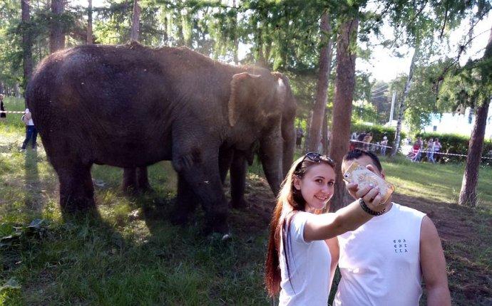 В парках Челябинска выгуливают настоящих слонов