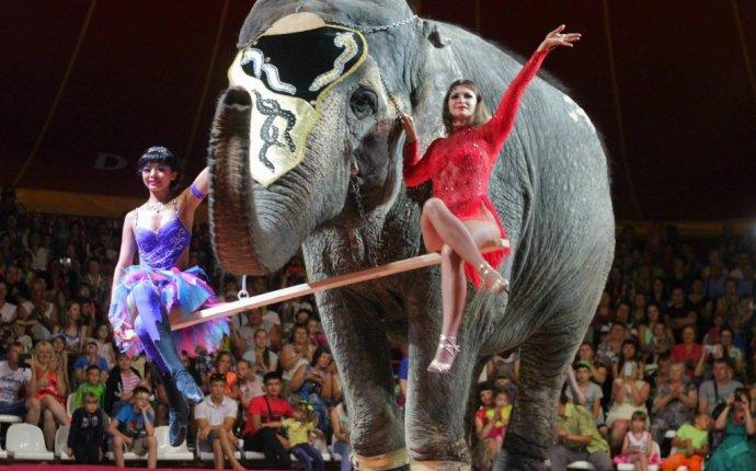 Варшавский цирк слонов-великанов — 2do2go