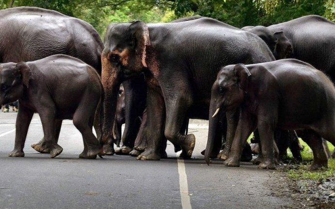 Военно-морской флот Шри-Ланки спас слонов, которых смыло в