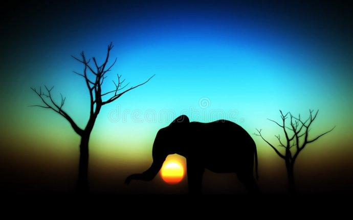 Восход солнца 4 слона Стоковая Фотография RF - изображение: 2117