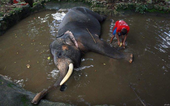 Захотелось чего-то большого и чистого? Помой слона